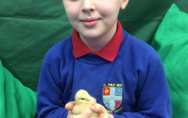 Eggcellent Winner in Class 2!