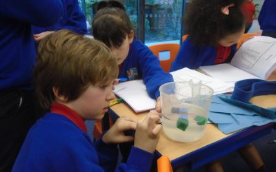 Archimedes Investigation in Year 3!